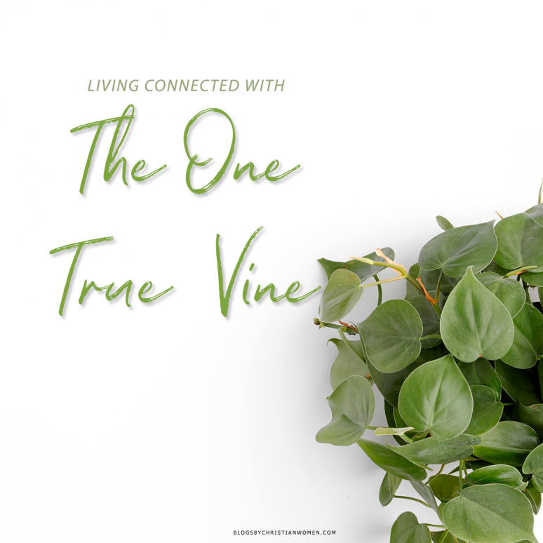 Only One Vine in Romania